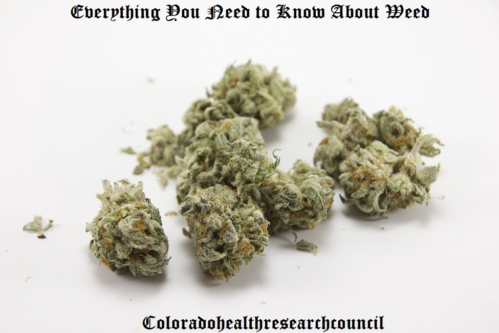 everything you need to know about weed