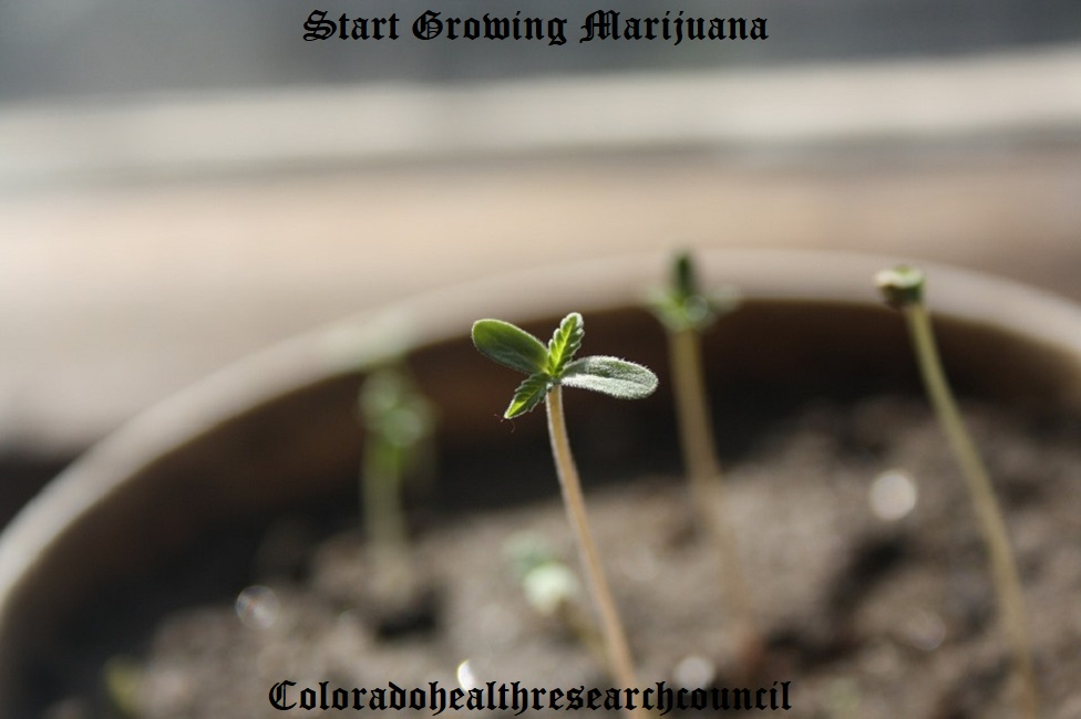 start growing marijuana