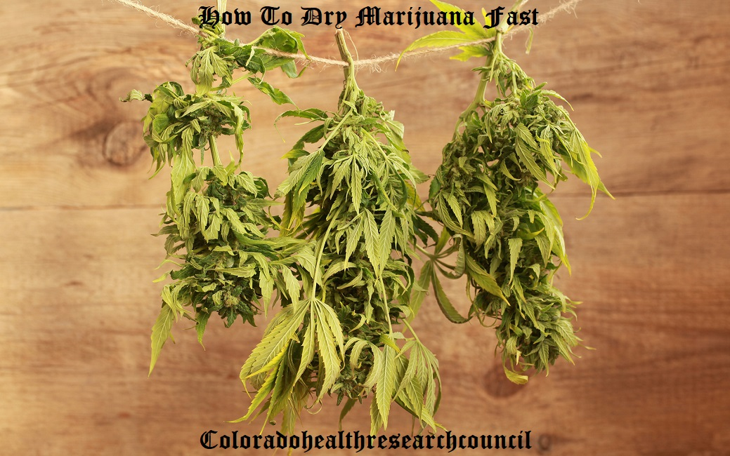 how to dry weed fast