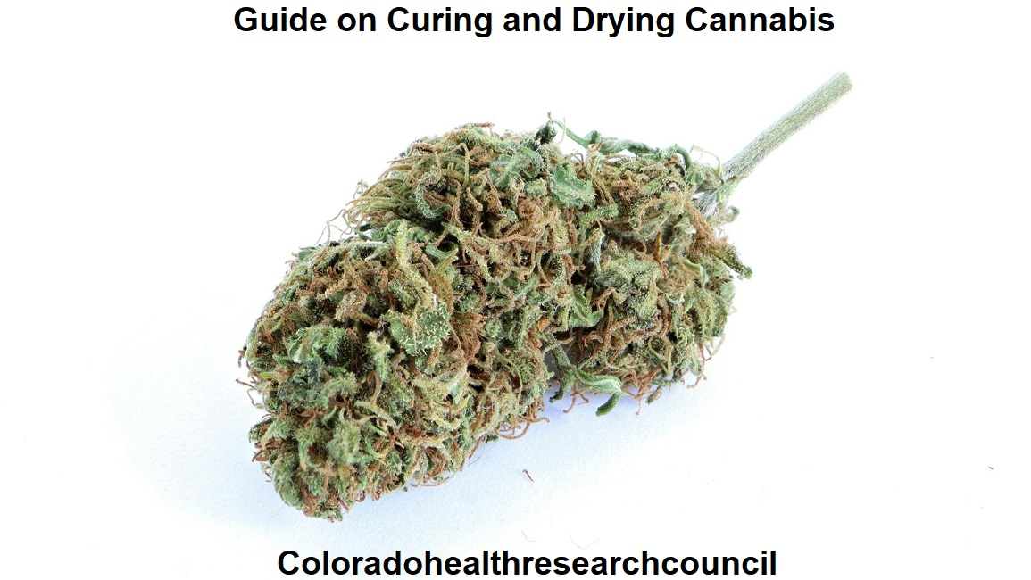 Guide on Curing and Drying Cannabis